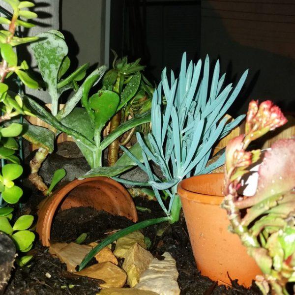 Jardiniere plantes graces