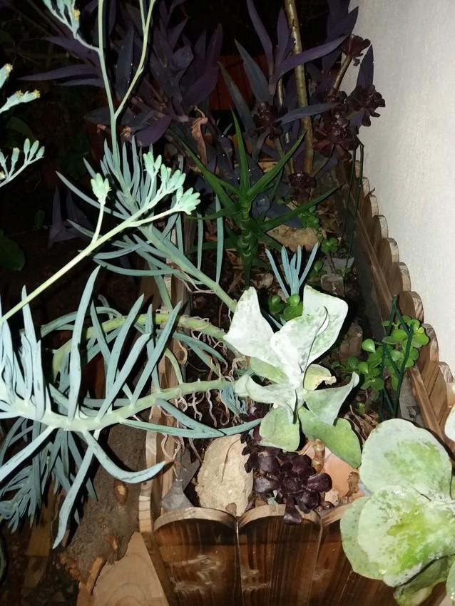 Jardiniere_Plantes_Graces_01-09-19_1 (1)