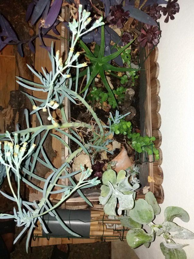 Jardiniere_Plantes_Graces_01-09-19_1 (2)