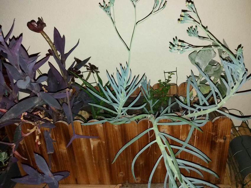 Jardiniere_Plantes_Graces_01-09-19_1 (3)