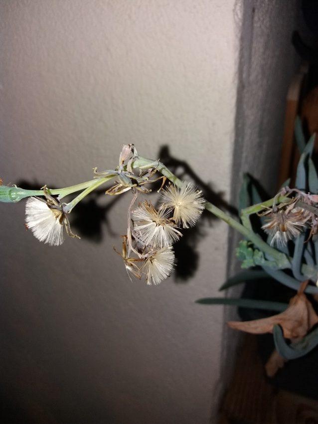 Jardiniere_Plantes_Graces_01-09-19_1 (4)