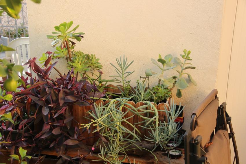 Jardiniere_Plantes_Graces_23-12-19_1 (2)