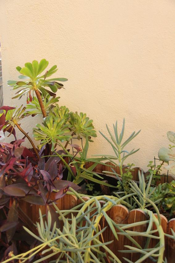 Jardiniere_Plantes_Graces_23-12-19_1 (3)