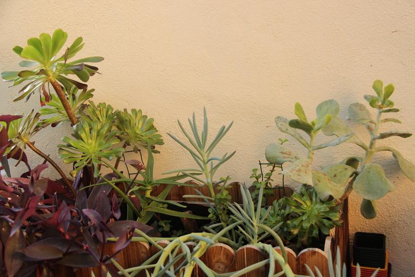 Jardiniere_Plantes_Graces_23-12-19_1 (4)